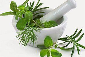 Guía de plantas, hierbas medicinales