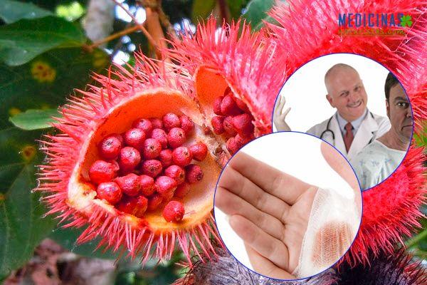 Achiote usos y propiedades medicinales