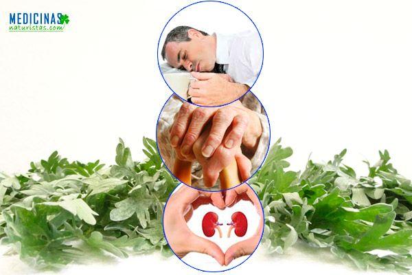 Ajenjo depurativo del hígado y regulador menstrual