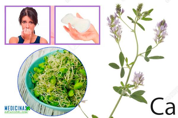 Alfalfa fuente de hormonas fitoestrógenas