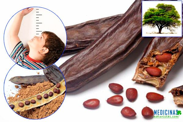 Algarrobo aporte nutritivo y medicina digestiva