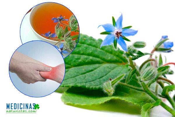 Borraja planta relajante y antiinflamatoria