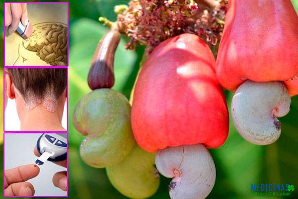 Marañón o casho fruto amazonico para el Alzheimer