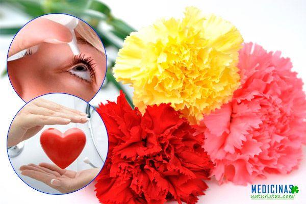 Clavel beneficios para los nervios y los ojos