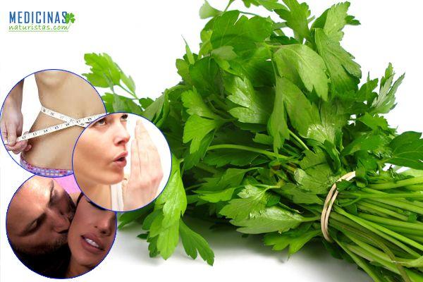 Culantro, cilantro propiedades medicinales