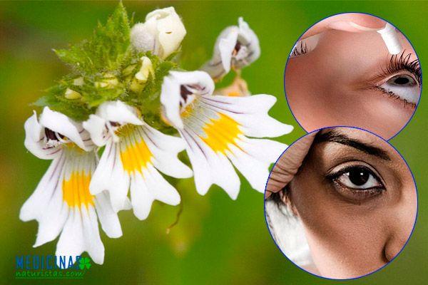 Eufrasia alivia infecciones oculares, conjuntivitis, orzuelo