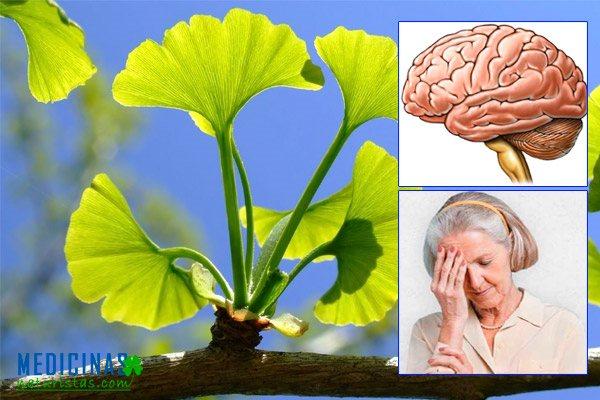 Ginkgo biloba para mejorar la circulación sanguínea cerebral