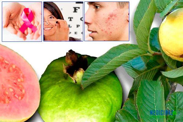 Guayaba beneficios frutos, hojas y corteza
