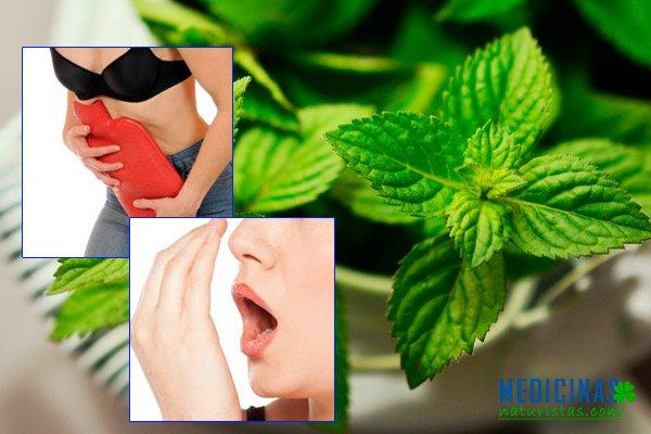 Hierbabuena para aliviar cólicos estomacales y menstruales