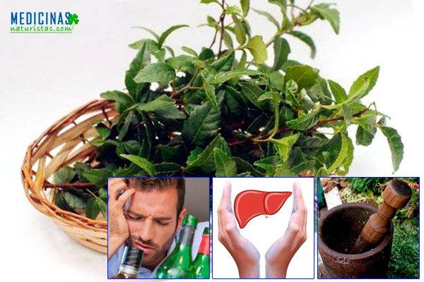 Kokũ propiedades medicinales para el hígado