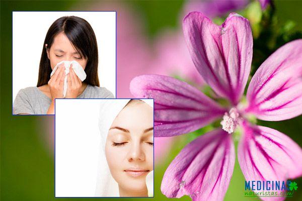 Malva propiedades antiinflamatorias, adiós catarros