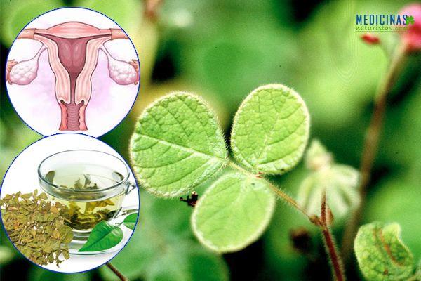 Manayupa poder depurativo y antiinflamatorio natural