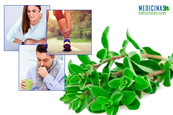 Mejorana planta antibacteriana y desinflamante natural