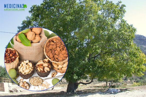 Nogal hojas fruto corteza propiedades medicinales nuez