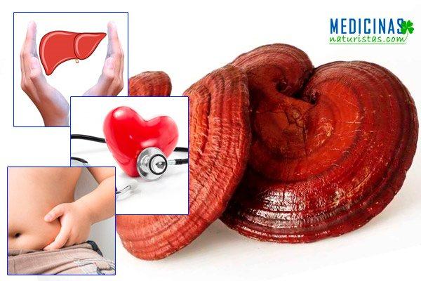 Reishi, ganoderma propiedades para el hígado y corazón