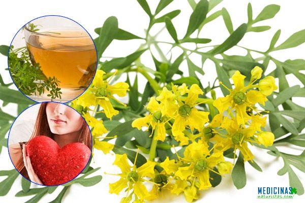 Ruda propiedades esotéricas y uso medicinal