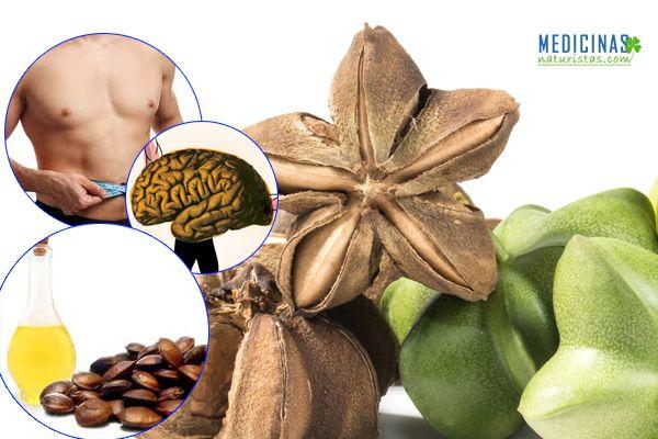 alimentos prohibidos para el acido urico o gota los boquerones en vinagre tiene acido urico niveles altos de acido urico en hombres