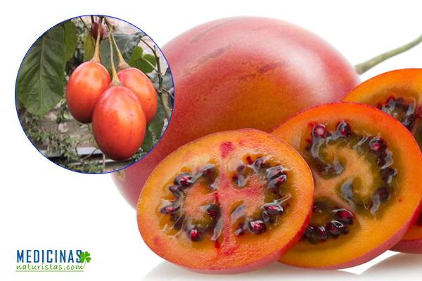 Tomate de árbol: Diabetes, COLESTEROL, infertilidad masculina