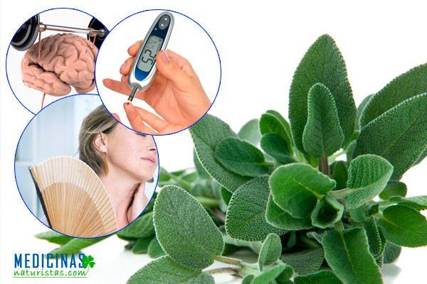 Salvia antibiótico natural, bactericida y antiséptica