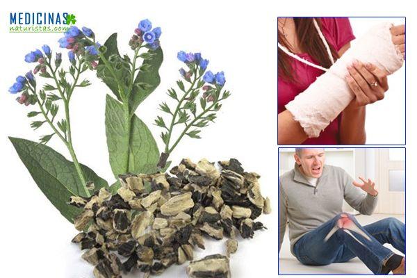 Suelda consuelda la planta para las fracturas y el dolor