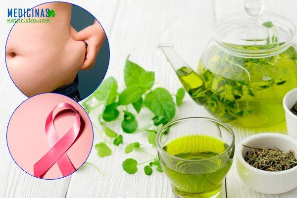 Té verde propiedades medicinales para adelgazar y evitar el cáncer