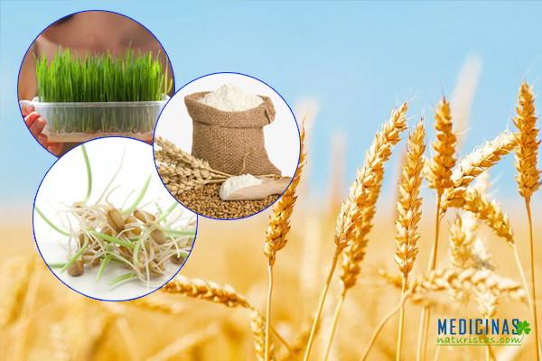 Trigo propiedades nutricionales buenas y malas