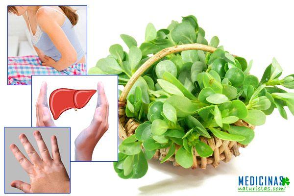 Verdolaga planta mágica para el trato urinario e hígado