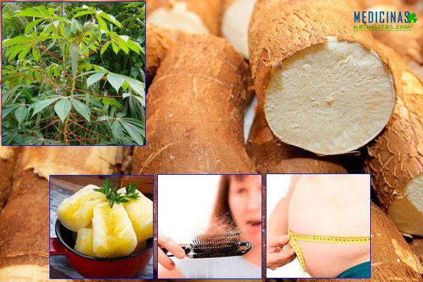 Yuca, mandioca beneficios y contraindicaciones
