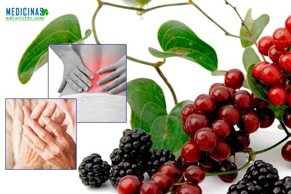 Zarzaparrilla beneficios para limpiar la sangre