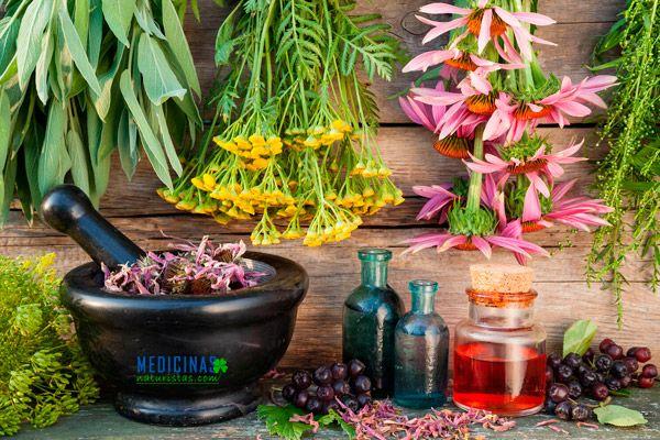 Guia de plantas medicinales