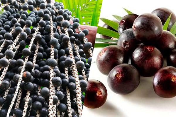 HUASAI, fruto amazónico para prolongar la juventud
