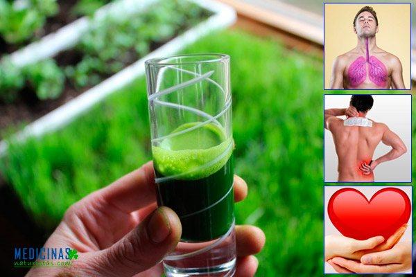 Clorofila, la sangre de las plantas que oxigena nuestro cuerpo