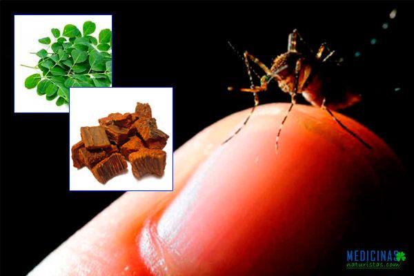 Malaria transmisión y tratamiento