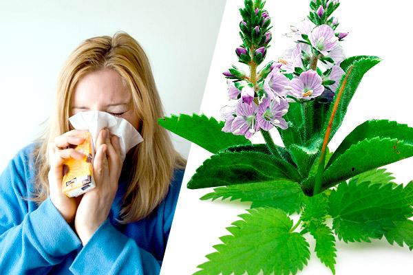 RINITIS los mejores tratamientos naturales